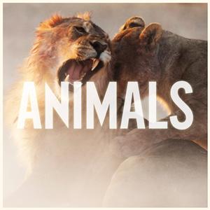 Maroon 5 - Animals 无和声伴奏